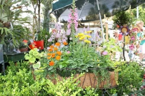flowers, green leaves, red geranium, blue bells, hyacinth, ivy